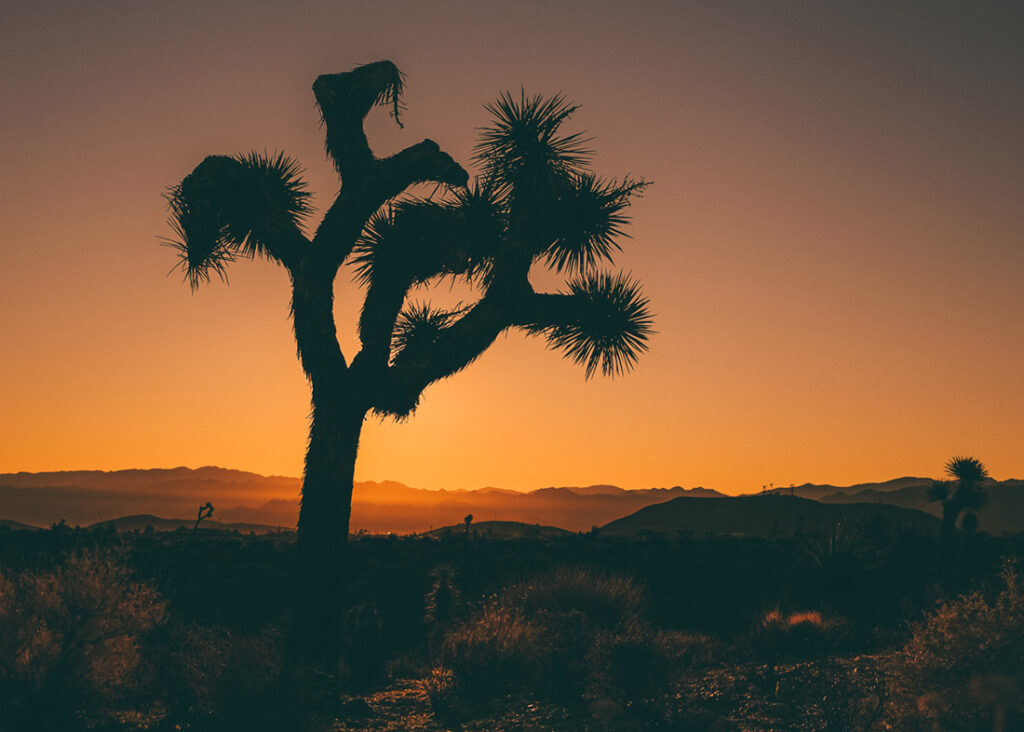 One of the best US travel destinations in 2021 is Joshua Tree, California