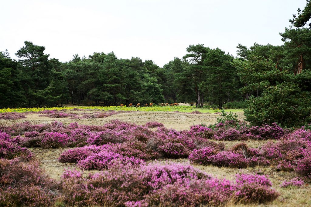 De Hoge Veluwe National Park - Most Beautiful Places in Europe