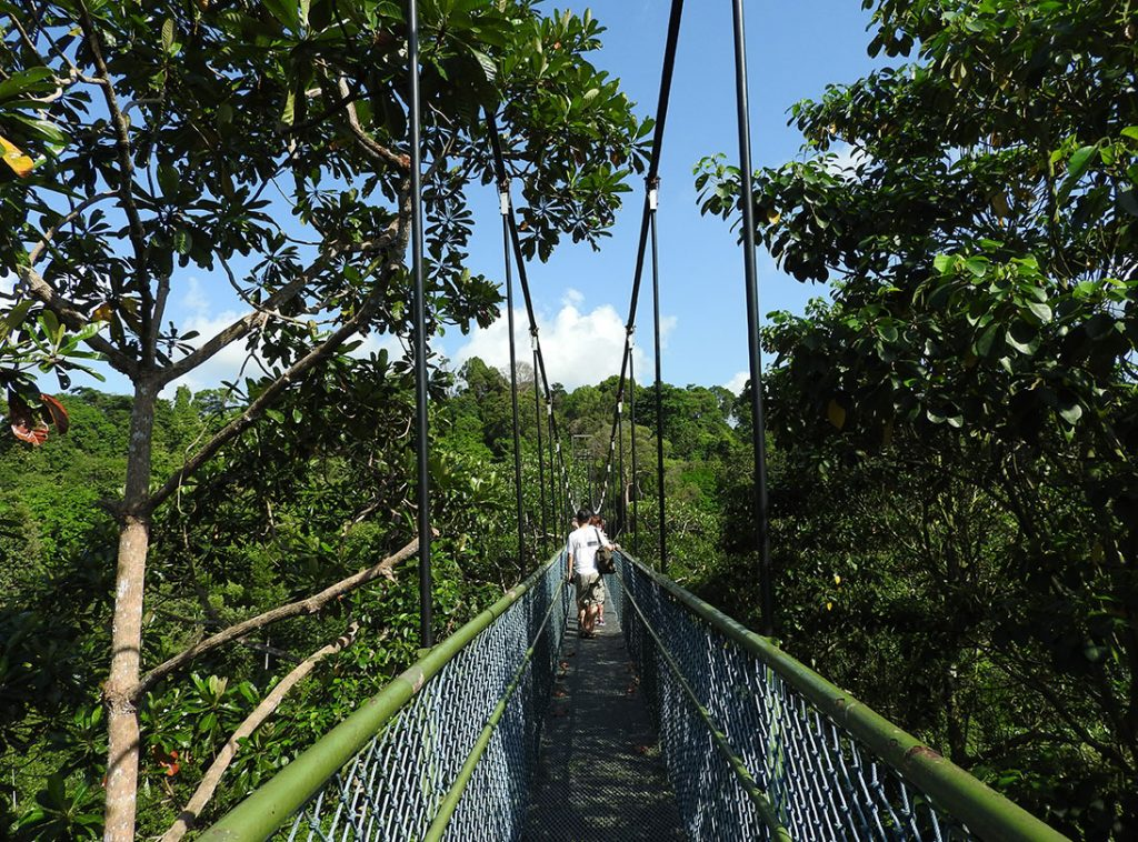 Singapore Tourist Spots - MacRitchie Reservoir & The Treetop Walk