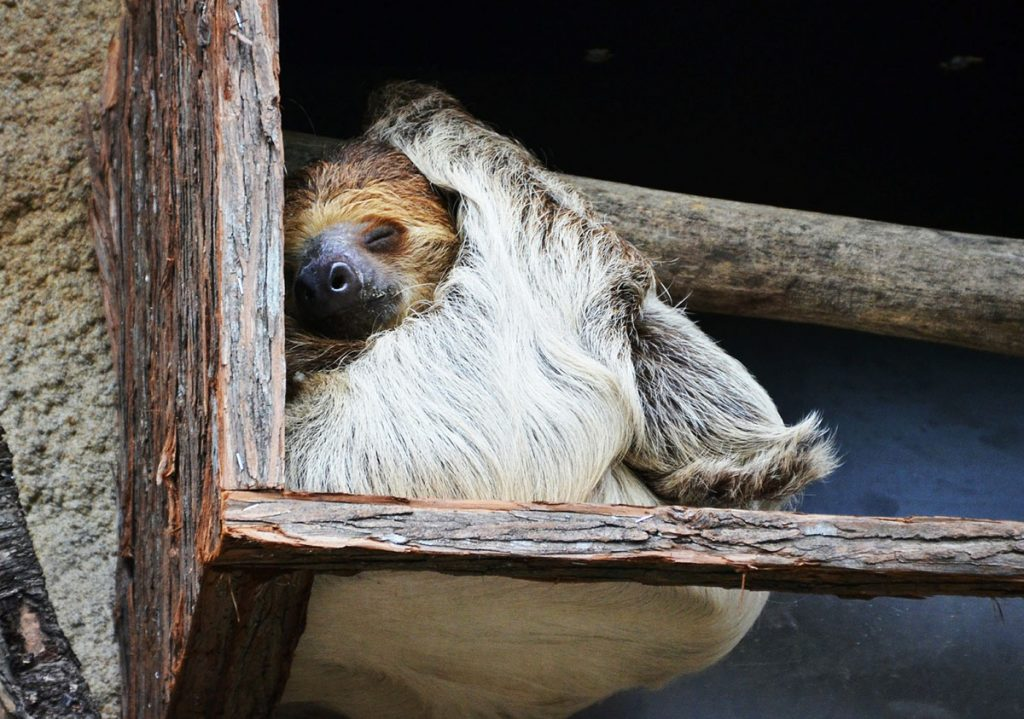 Roatan Excursions - Sloth Hangout