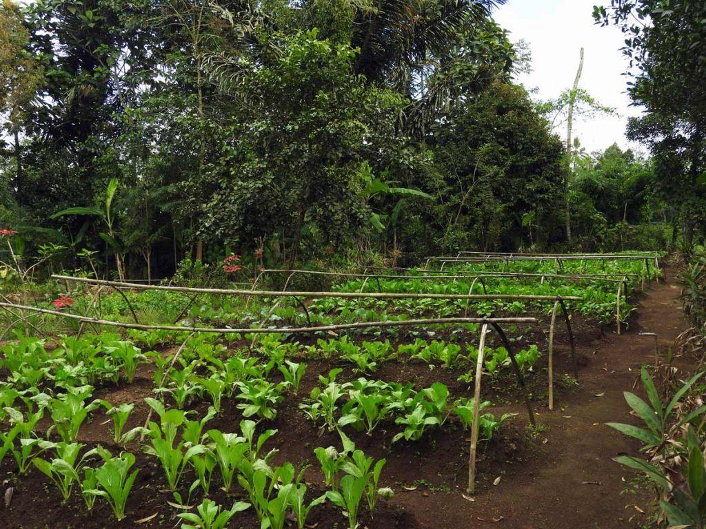 Ubud Cooking Class - Organic Farm Tour at Pemulan Bali Farm Cooking