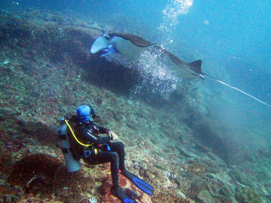 Scuba Dive with Manta Rays from Nusa Lembongan or Nusa Ceningan