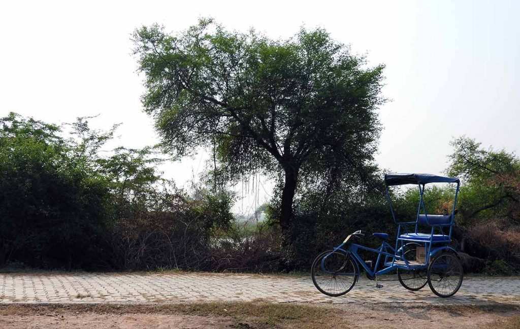 Travel by Bicycle Rickshaw in the Bharatpur Bird Sanctuary in Keoladeo National Park