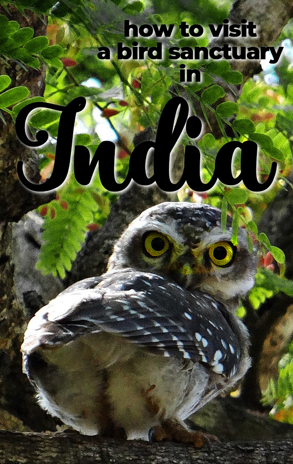 India isn't just big, busy cities. Only one hour from the Taj Mahal you can find the Bharatpur Bird Sanctuary in Keoladeo National Park, where more than 300 species of birds fly freely, and you may just spot an antelope, jackal or cobra too! A great one-day addition to any North India itinerary.